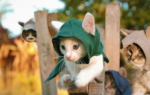 Assassin's Kittens Unity