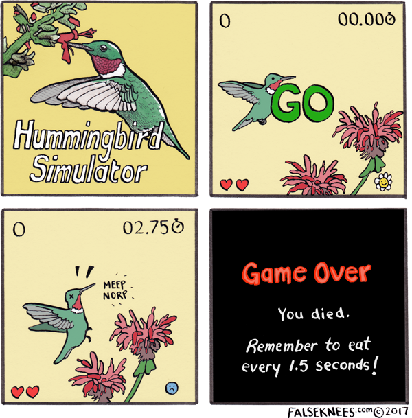 Hummingbird Simulator